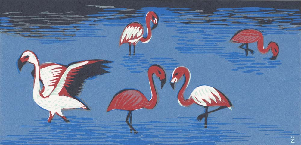 Flamingos stehen im Wasser